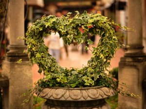 Сердце из зелени  № 1599087 бесплатно