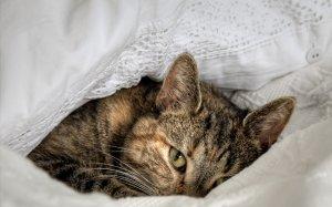 кот животное котенок постель без смс