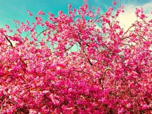 Розовая прелесть крупным планом фото фото 744-75