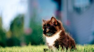 милый котенок мордочка камень трава без смс
