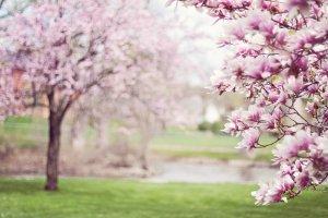 Картинка Весны На Рабочий Стол Скачать