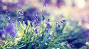 Весна пришла. Японское хайкокко: new_oboroten — LiveJournal | 168x300